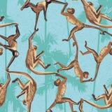 Картина джунглей обезьяны безшовная Стоковая Фотография RF