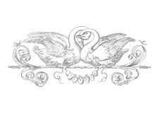Картина лебедей гравировки Стоковые Изображения