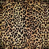 Картина леопарда Стоковое Фото