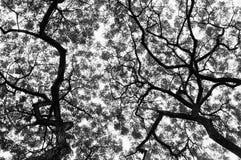 Картина дерева в черно-белом стиле Стоковое фото RF
