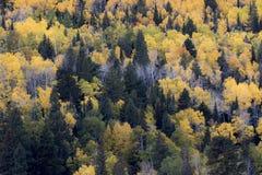 Картина дерева осени Стоковые Изображения RF