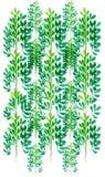 Картина дерева разрешения акварели Стоковые Фото