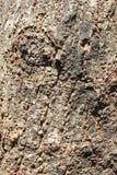 Картина дерева Стоковые Изображения