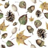 Картина леса осени акварели безшовная Вручите покрашенные конус сосны, жолудь, ягоду и желтый цвет и листья падения зеленого цвет Стоковое Фото