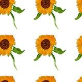 Картина лета солнцецвета акварели безшовная Стоковое фото RF