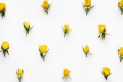 Картина желтых роз Стоковая Фотография RF