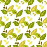 картина Желт-зеленых листьев безшовная на белой предпосылке Стоковые Изображения RF