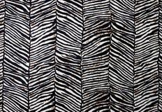 Картина зебры Стоковое Изображение