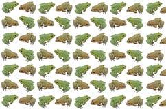 Картина зеленых и желтых деталей лягушки Стоковые Фото