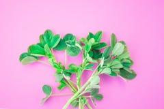 Картина зеленых лепестков на розовой предпосылке o стоковые изображения rf