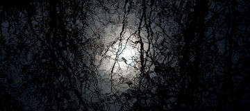 Картина зеркала леса воды Стоковое Изображение RF
