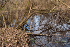 Картина зеркала леса воды Стоковое Фото