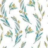 Картина зеленой оливки акварели Оливковые ветки Стоковые Фотографии RF