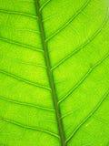 Картина зеленых листьев Стоковое фото RF