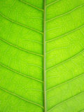 Картина зеленых листьев Стоковые Фото