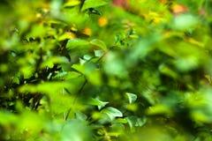 Картина листвы абстрактная Стоковые Изображения RF