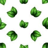 Картина листьев мяты на белой предпосылке Стоковое Изображение RF