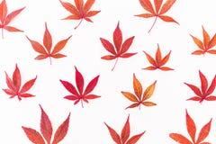 Картина листьев осени на белой предпосылке Плоское положение, взгляд сверху белизна осени изолированная принципиальной схемой Стоковая Фотография RF