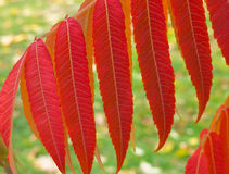 картина листьев осени Стоковое фото RF