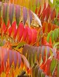 картина листьев осени Стоковые Изображения RF