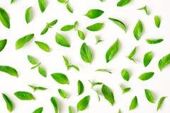 Картина листьев свежей мяты Стоковые Изображения