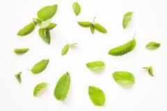 Картина листьев свежей мяты Стоковое Изображение