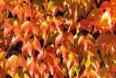 Картина 2 листьев Стоковое Изображение