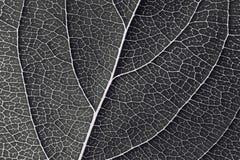 Картина листьев Стоковое Фото