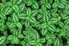 Картина листьев Стоковая Фотография