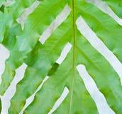 Картина листьев Стоковые Фото