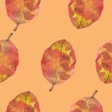 Картина лист акварели безшовная Стоковое Изображение