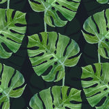 Картина лист monstera акварели безшовная Стоковые Фотографии RF