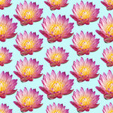 Картина лилии воды Стоковые Изображения RF