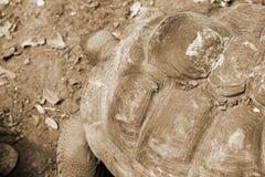 Картина и предпосылка черепахи carapace стоковые изображения