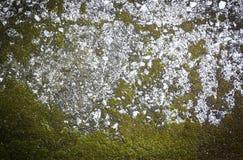 Картина и текстура бетона с заводом Стоковое фото RF