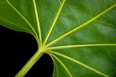 Картина и текстуры листьев Стоковые Фотографии RF