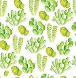 Картина кактуса акварели безшовная иллюстрация вектора