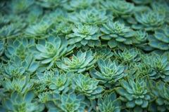 Картина кактуса листьев Стоковое Изображение RF