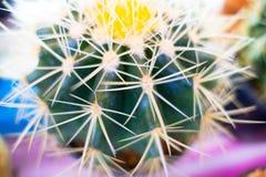 Картина кактуса крупного плана зеленая для кактуса, предпосылки Стоковые Изображения RF