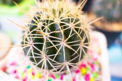 Картина кактуса крупного плана зеленая для кактуса, предпосылки Стоковое Изображение RF