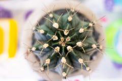 Картина кактуса крупного плана зеленая для кактуса, предпосылки Стоковое фото RF