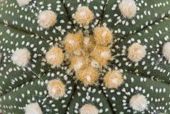 Картина кактуса стоковые изображения rf