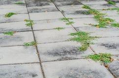 Картина каменной плитки пола Стоковое Изображение