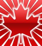 картина клена листьев Стоковые Изображения RF