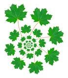 картина клена листьев Стоковые Фото