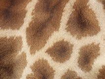 Картина кожи жирафа Стоковые Изображения RF