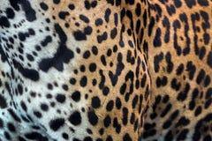 Картина кожи и леопарда Стоковое Изображение