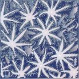 Картина коралла Xenia Стоковые Изображения