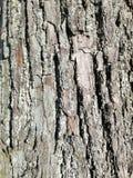 Картина коры старого дерева стоковая фотография rf