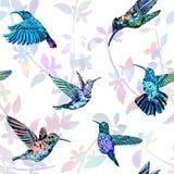 Картина колибри безшовная Предпосылка нарисованная рукой тропическая экзотическая Стоковая Фотография
